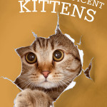 Meow-nificent Kittens: The secret personal internet address & password log book for kitten & cat lovers