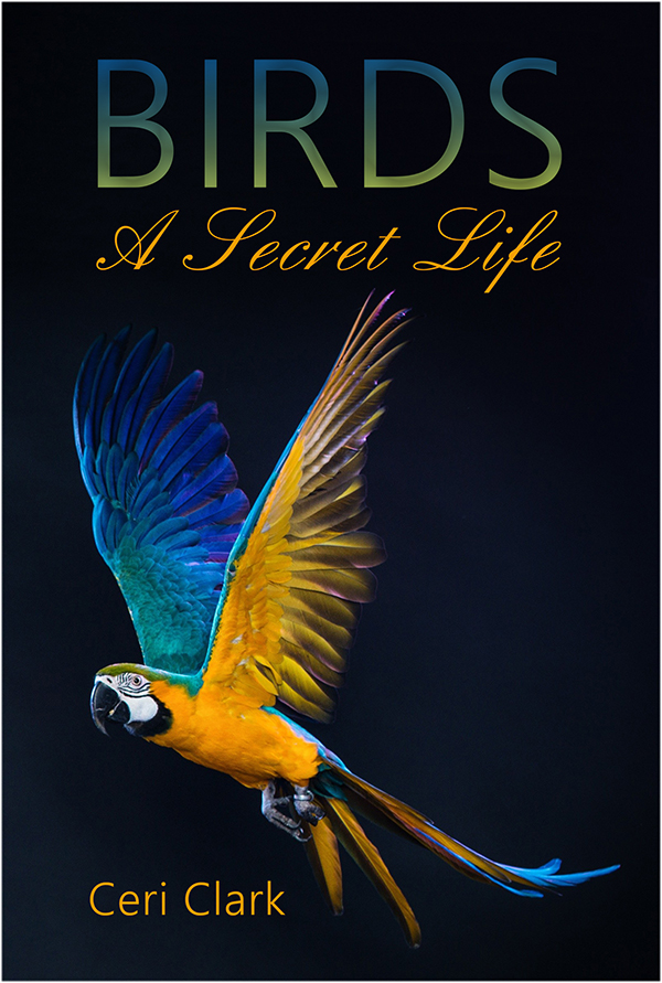 Book Cover Design Of Birds : Birds password book the hidden